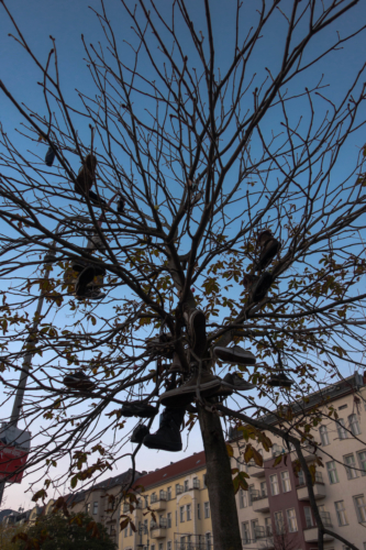 Shoes on a tree in Berlin